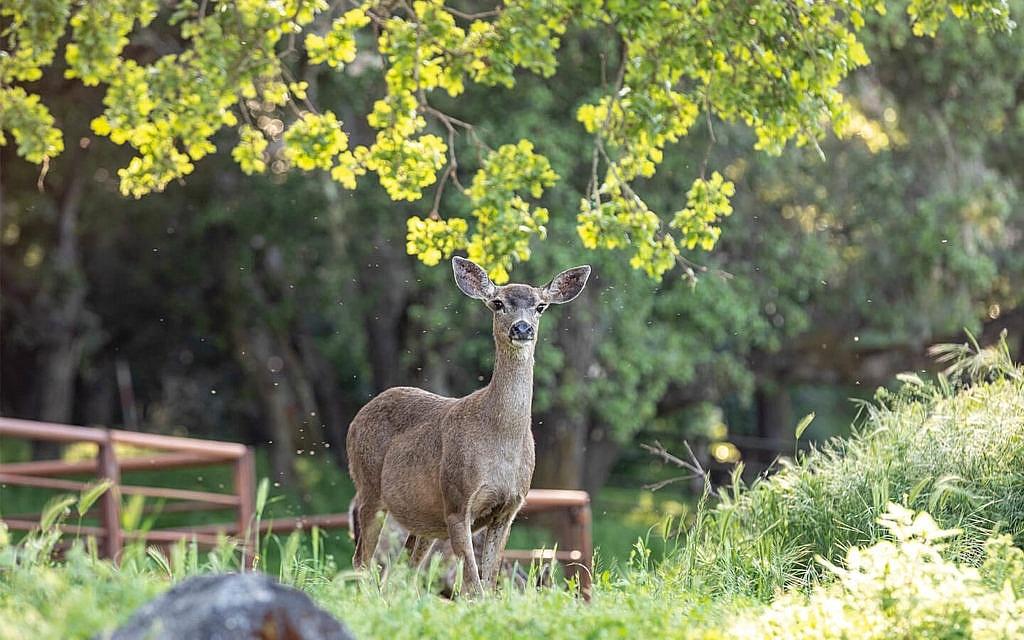 Nature at Camp Carmel Valley