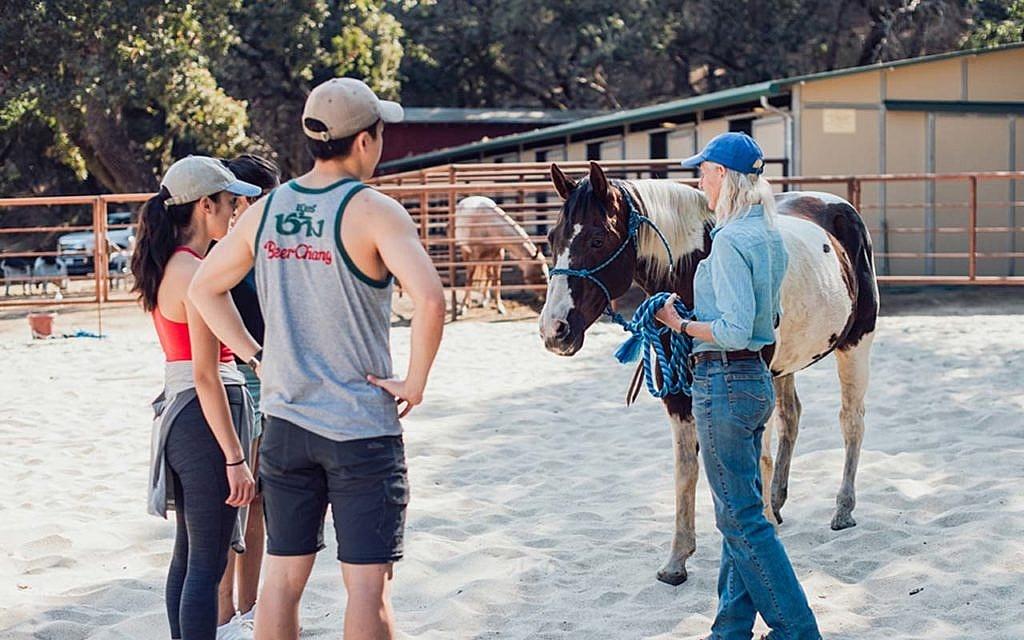 Camp Carmel Valley Horse classes