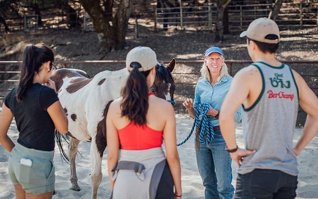 Camp Carmel Valley Horse